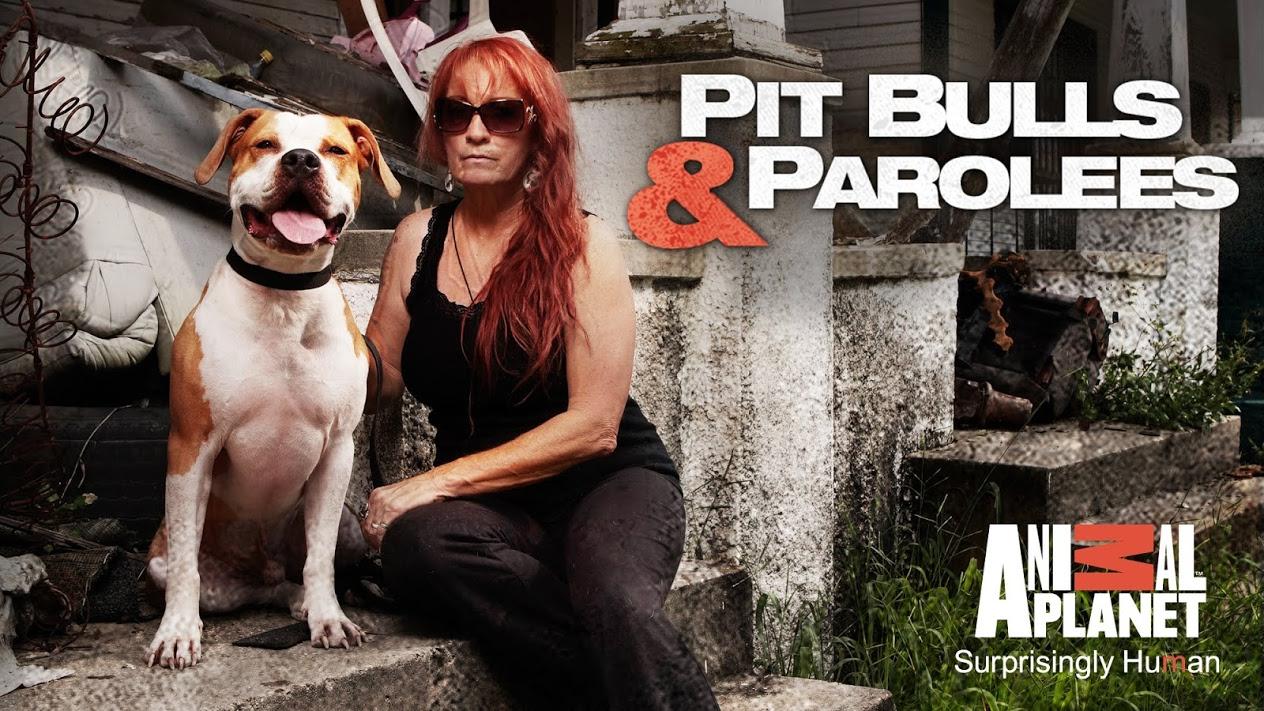 Will Animal Planet Produce Pit Bulls & Parolees Season 13?